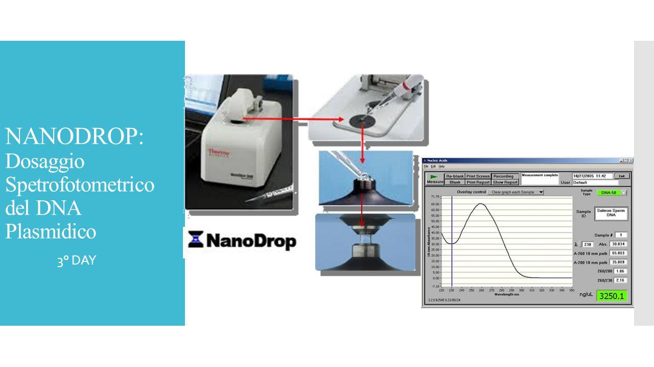NANODROP: Dosaggio Spetrofotometrico del DNA Plasmidico  3° DAY