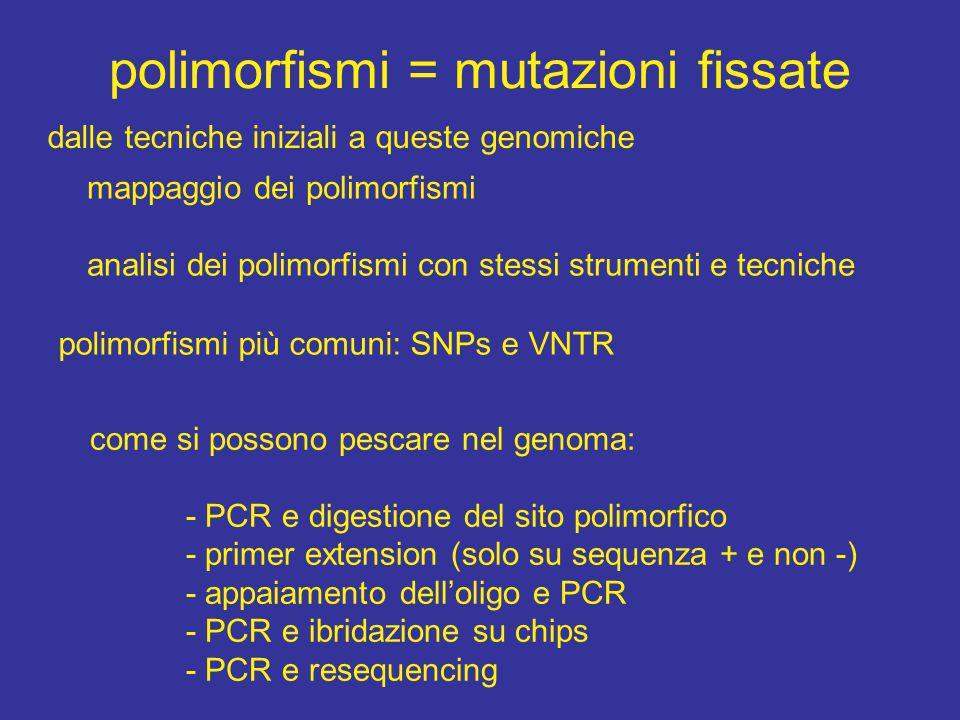 polimorfismi = mutazioni fissate mappaggio dei polimorfismi analisi dei polimorfismi con stessi strumenti e tecniche polimorfismi più comuni: SNPs e VNTR come si possono pescare nel genoma: - PCR e digestione del sito polimorfico - primer extension (solo su sequenza + e non -) - appaiamento dell'oligo e PCR - PCR e ibridazione su chips - PCR e resequencing dalle tecniche iniziali a queste genomiche