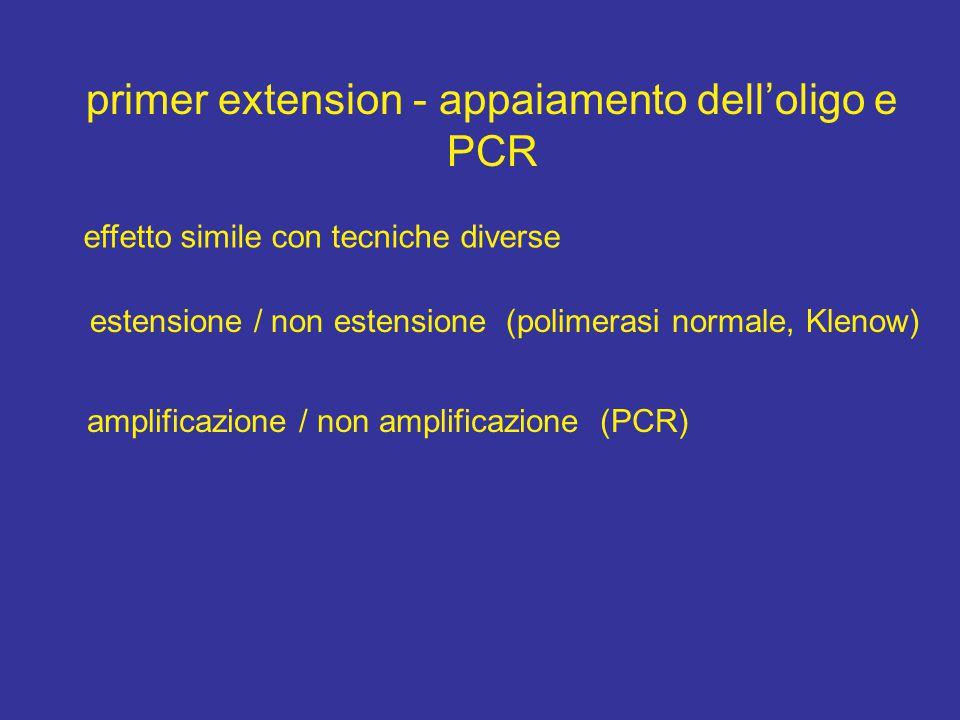 primer extension - appaiamento dell'oligo e PCR effetto simile con tecniche diverse estensione / non estensione (polimerasi normale, Klenow) amplificazione / non amplificazione (PCR)