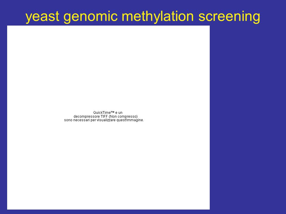 yeast genomic methylation screening