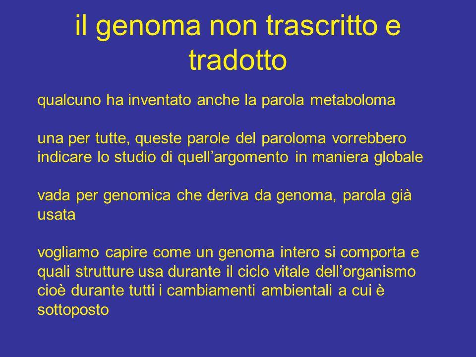 il genoma non trascritto e tradotto qualcuno ha inventato anche la parola metaboloma una per tutte, queste parole del paroloma vorrebbero indicare lo studio di quell'argomento in maniera globale vada per genomica che deriva da genoma, parola già usata vogliamo capire come un genoma intero si comporta e quali strutture usa durante il ciclo vitale dell'organismo cioè durante tutti i cambiamenti ambientali a cui è sottoposto