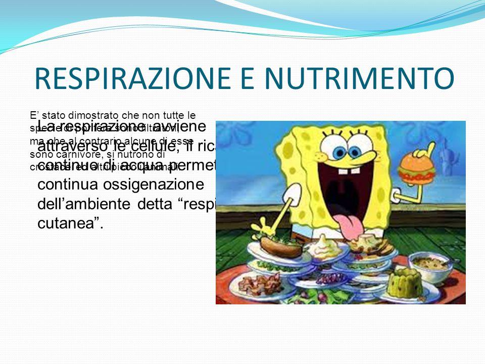 RESPIRAZIONE E NUTRIMENTO La respirazione avviene attraverso le cellule, il ricambio continuo di acqua permette una continua ossigenazione dell'ambien