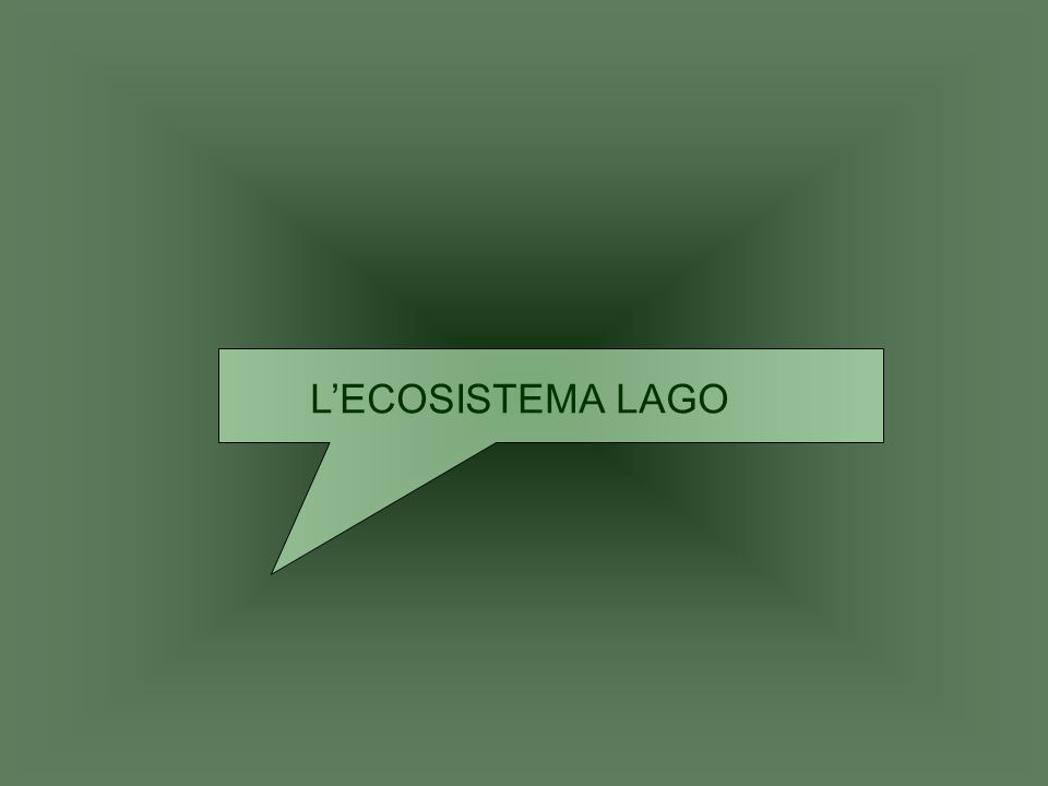 L'ECOSISTEMA LAGO