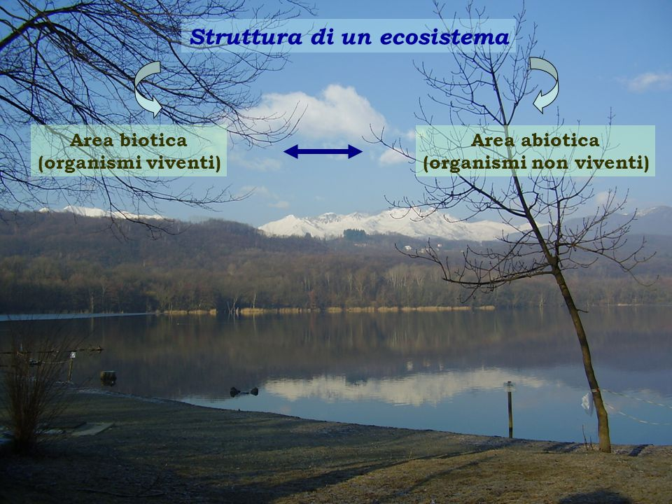 Struttura di un ecosistema Area biotica (organismi viventi) Area abiotica (organismi non viventi)
