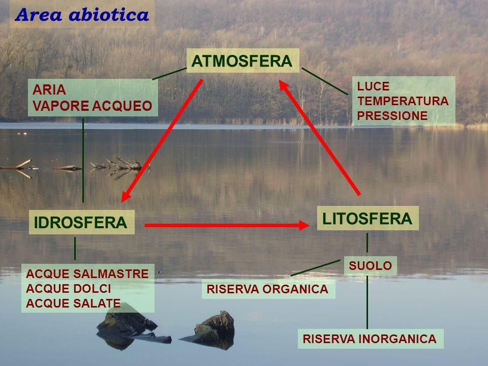 Area abiotica ARIA VAPORE ACQUEO ATMOSFERA LUCE TEMPERATURA PRESSIONE LITOSFERA IDROSFERA SUOLO RISERVA ORGANICA RISERVA INORGANICA ACQUE SALMASTRE AC