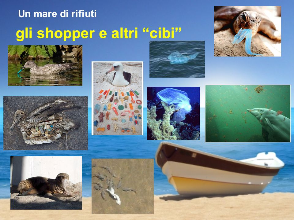 gli shopper e altri cibi Un mare di rifiuti gli shopper e altri cibi Un mare di rifiuti