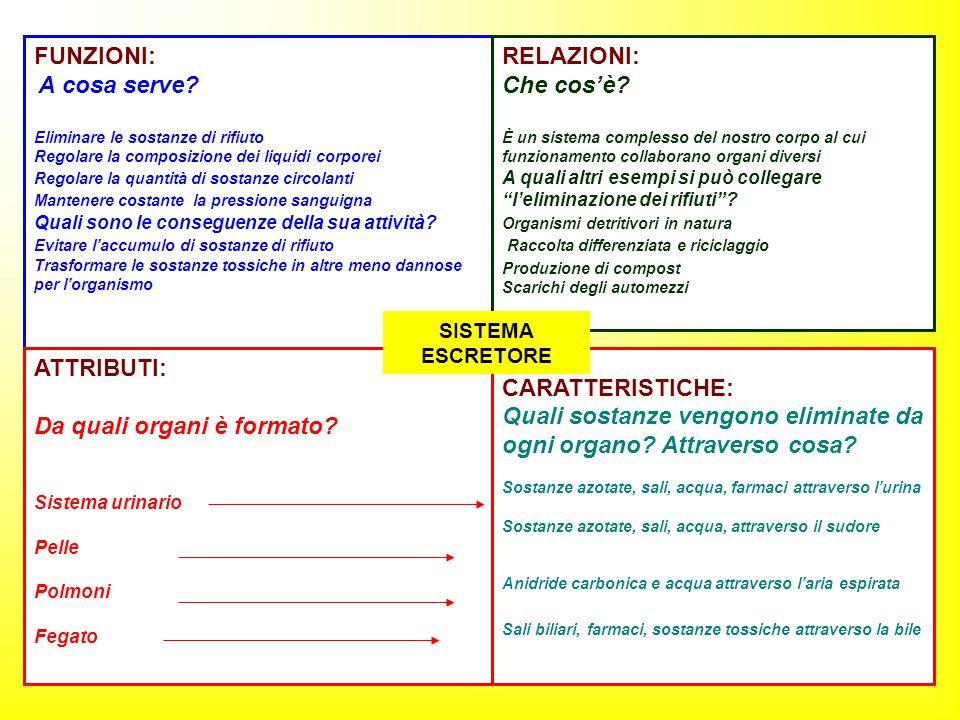 FUNZIONI: A cosa serve? Eliminare le sostanze di rifiuto Regolare la composizione dei liquidi corporei Regolare la quantità di sostanze circolanti Man