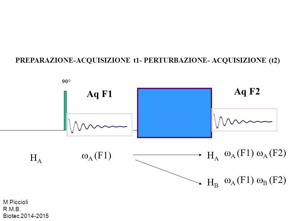 PREPARAZIONE-ACQUISIZIONE t1- PERTURBAZIONE- ACQUISIZIONE (t2) 90° Aq F1 HAHA  A (F1) HBHB Aq F2  A (F1)  B (F2) HAHA  A (F1)  A (F2) M Piccioli