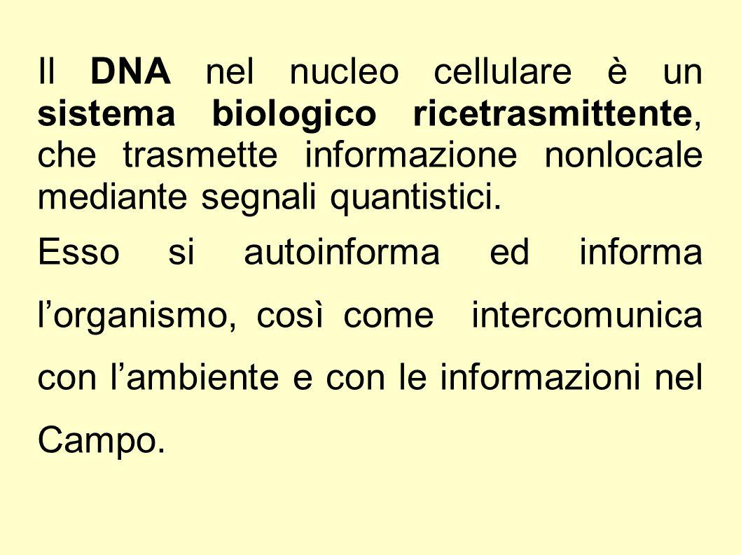 Il DNA nel nucleo cellulare è un sistema biologico ricetrasmittente, che trasmette informazione nonlocale mediante segnali quantistici. Esso si autoin
