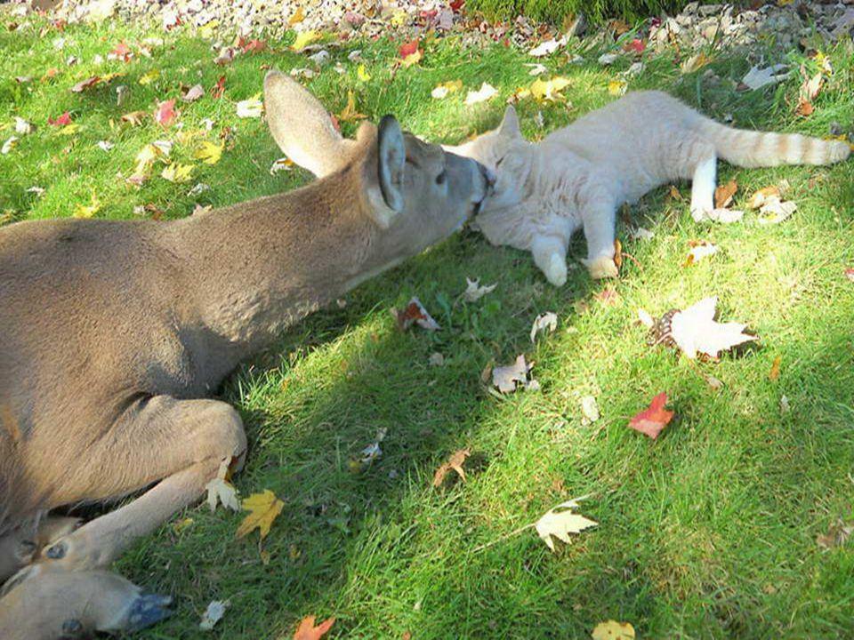 Vi ricordate di Bambi e del coniglio! Bene, li abbiamo appena ritrovati!