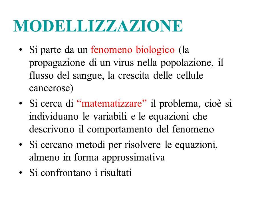MODELLIZZAZIONE Si parte da un fenomeno biologico (la propagazione di un virus nella popolazione, il flusso del sangue, la crescita delle cellule canc
