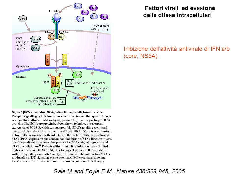 Gale M and Foyle E.M., Nature 436:939-945, 2005 Fattori virali ed evasione delle difese intracellulari Inibizione dell'attività antivirale di IFN a/b