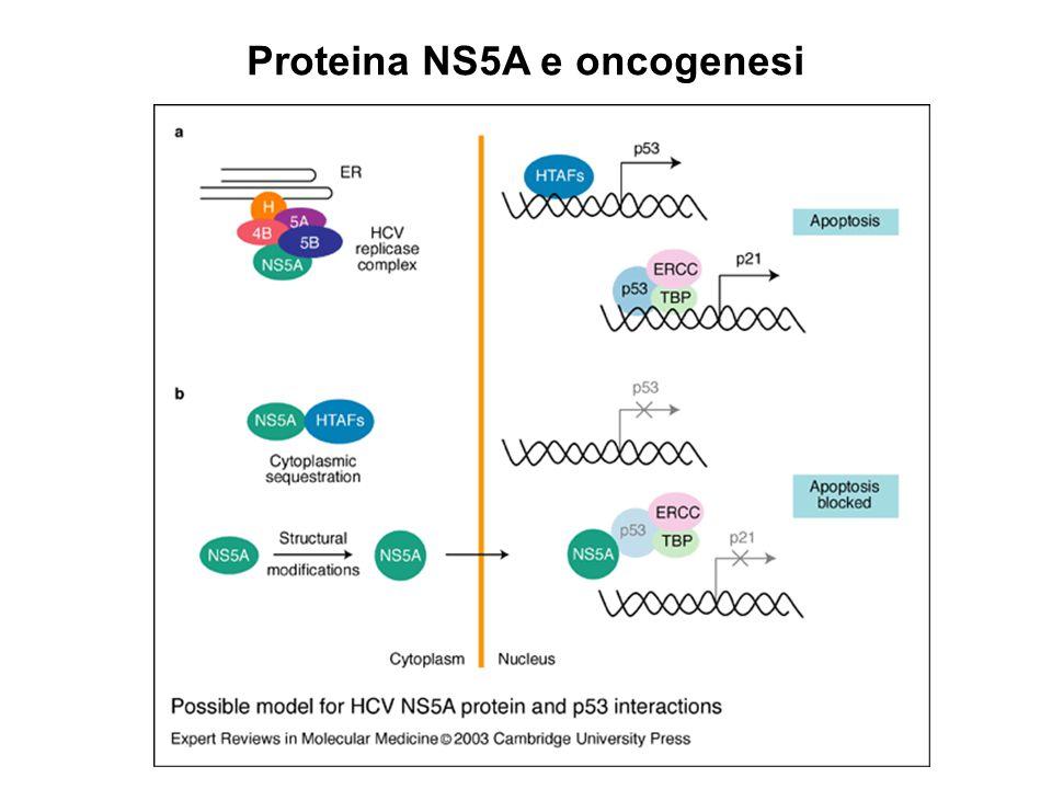Proteina NS5A e oncogenesi