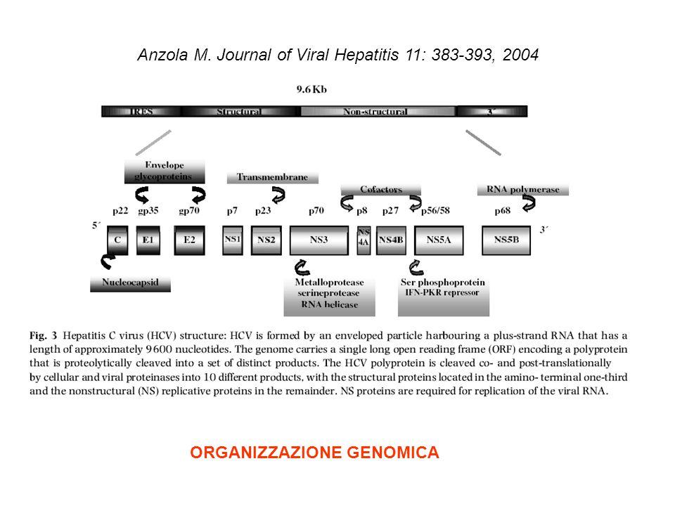 Anzola M. Journal of Viral Hepatitis 11: 383-393, 2004 ORGANIZZAZIONE GENOMICA