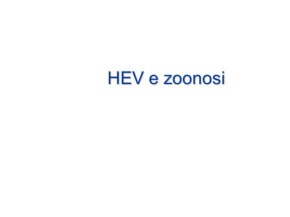 HEV e zoonosi