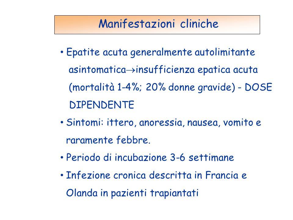 Manifestazioni cliniche Epatite acuta generalmente autolimitante asintomatica  insufficienza epatica acuta (mortalità 1-4%; 20% donne gravide) - DOSE