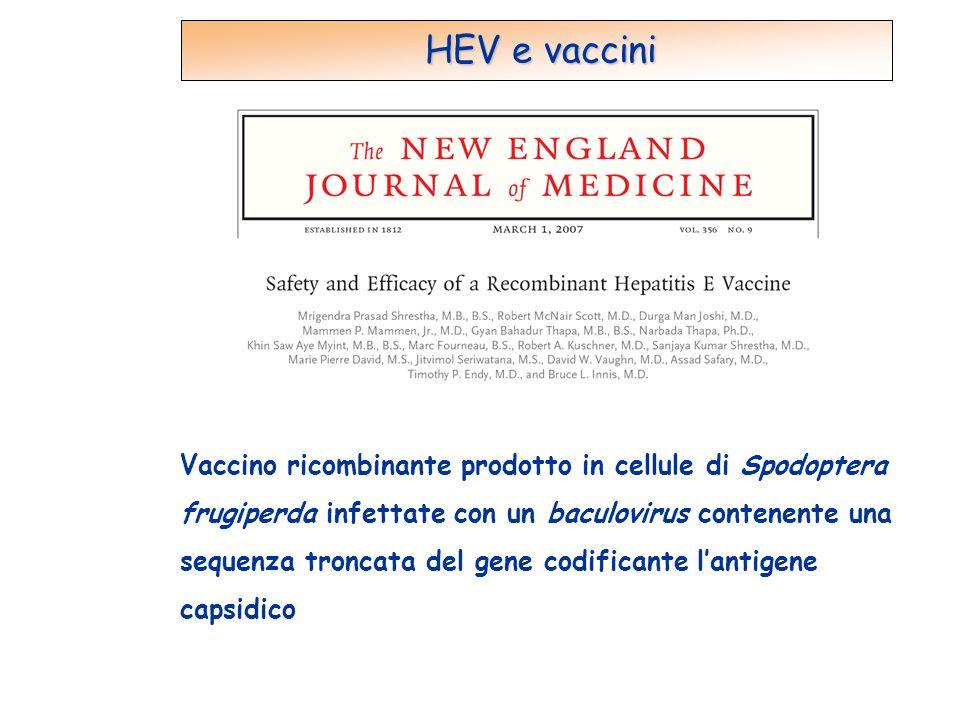 HEV e vaccini Vaccino ricombinante prodotto in cellule di Spodoptera frugiperda infettate con un baculovirus contenente una sequenza troncata del gene