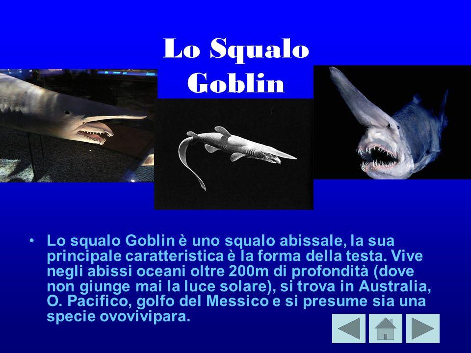 Lo Squalo Goblin Lo squalo Goblin è uno squalo abissale, la sua principale caratteristica è la forma della testa.