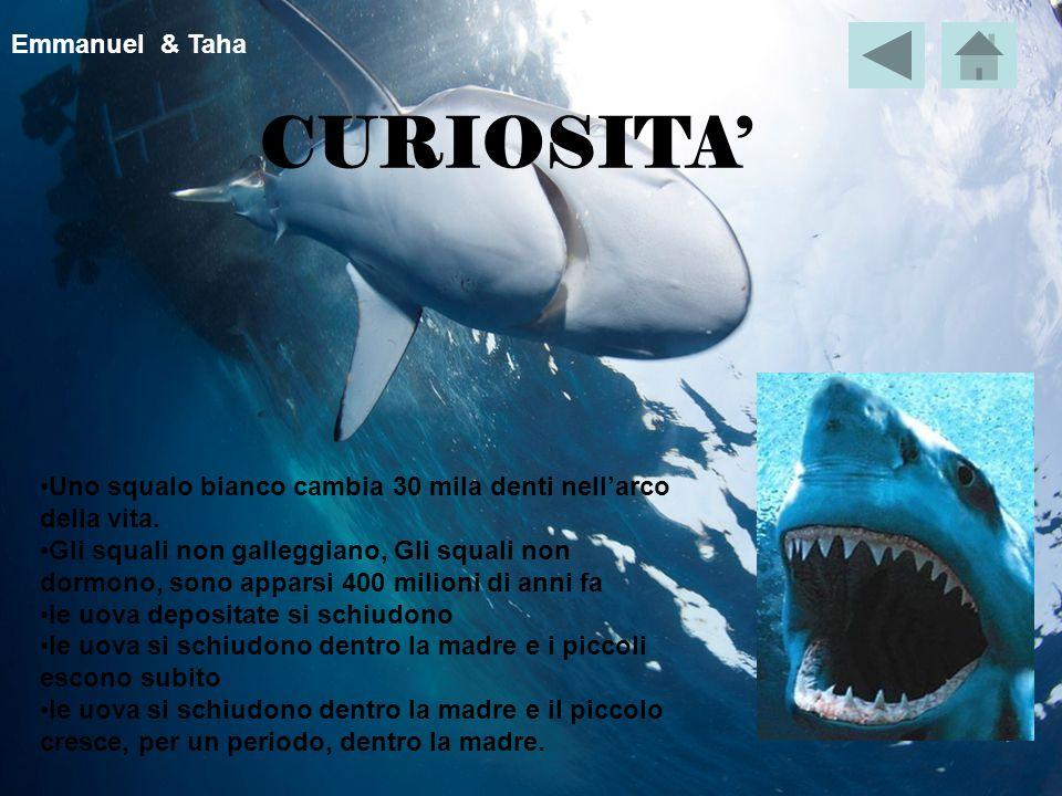CURIOSITA' Uno squalo bianco cambia 30 mila denti nell'arco della vita.