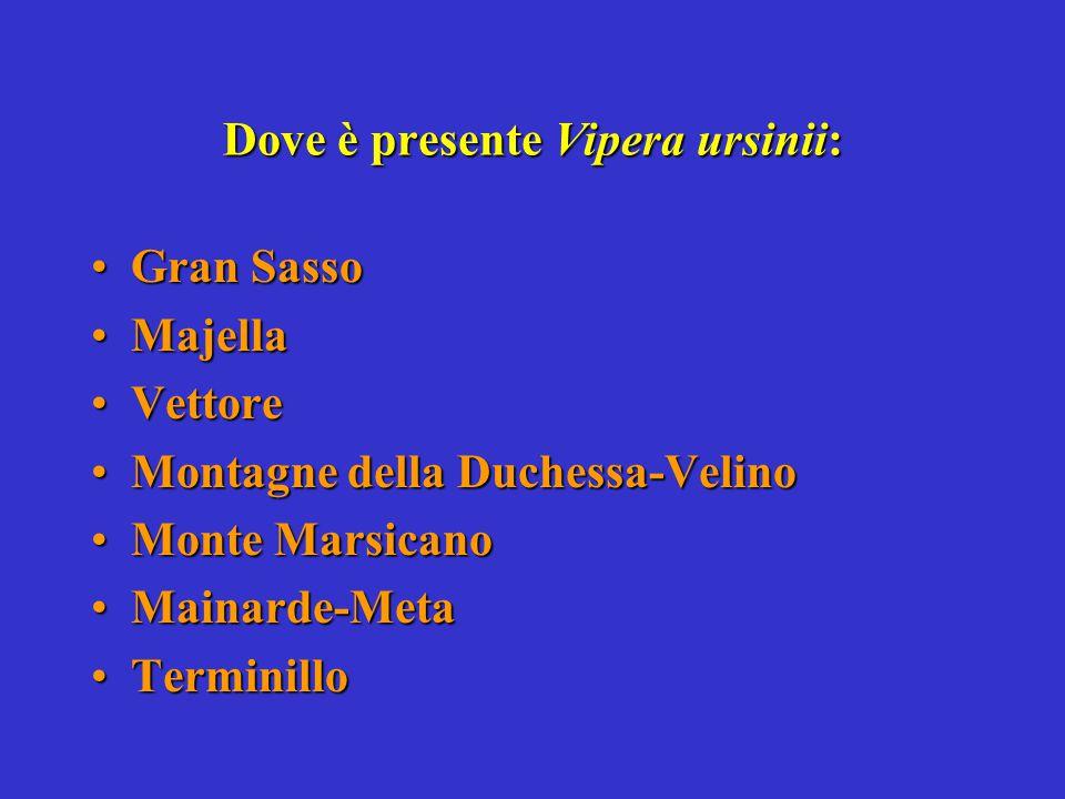 Dove è presente Vipera ursinii: Gran SassoGran Sasso MajellaMajella VettoreVettore Montagne della Duchessa-VelinoMontagne della Duchessa-Velino Monte