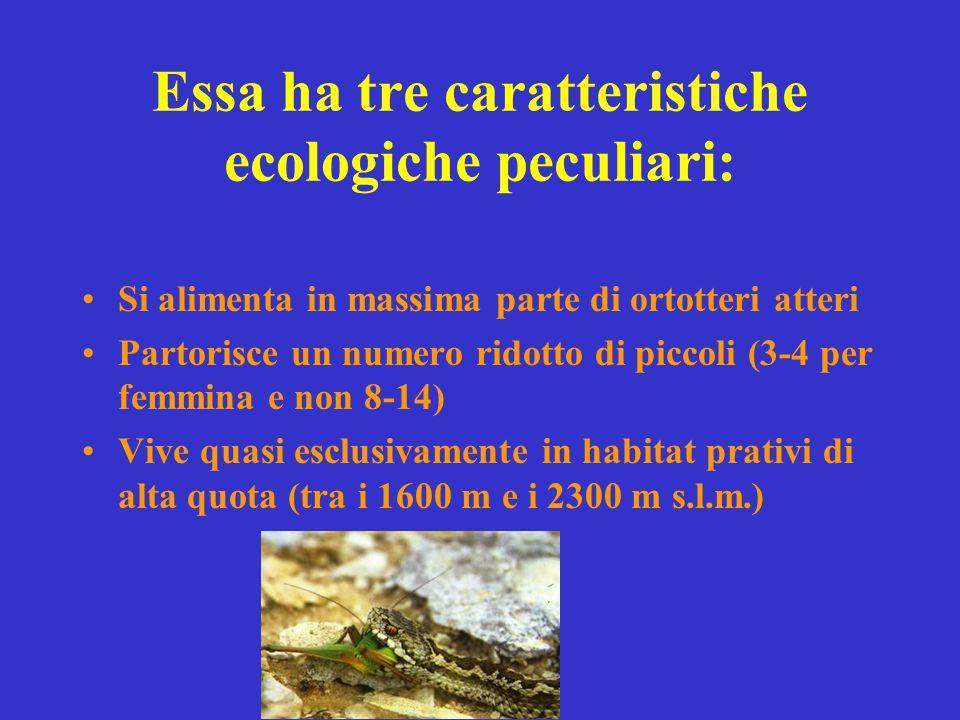 Essa ha tre caratteristiche ecologiche peculiari: Si alimenta in massima parte di ortotteri atteri Partorisce un numero ridotto di piccoli (3-4 per fe