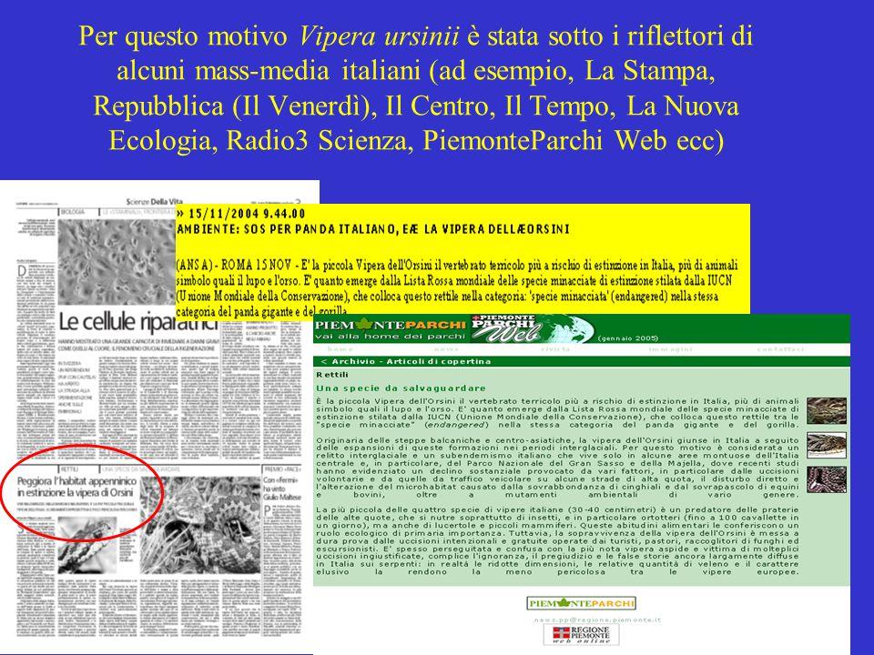 Per questo motivo Vipera ursinii è stata sotto i riflettori di alcuni mass-media italiani (ad esempio, La Stampa, Repubblica (Il Venerdì), Il Centro,