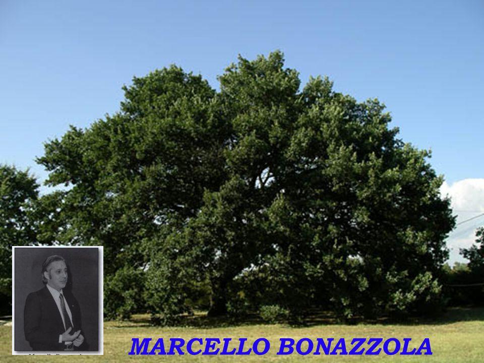 MARCELLO BONAZZOLA