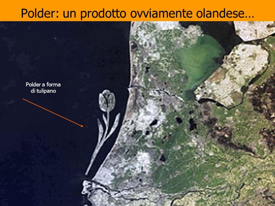 Polder: un prodotto ovviamente olandese… Polder a forma di tulipano