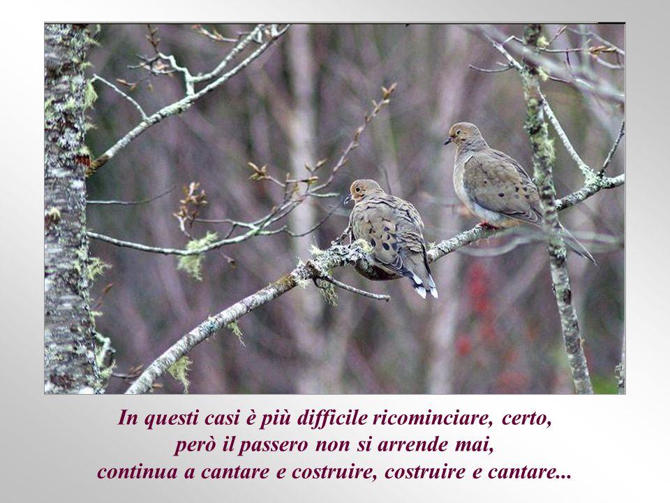 A volte, molte volte, prima che nascano i piccoli, la pioggia, un temporale, oppure altri animali distruggono il nido, questa volta con il suo prezioso contenuto...