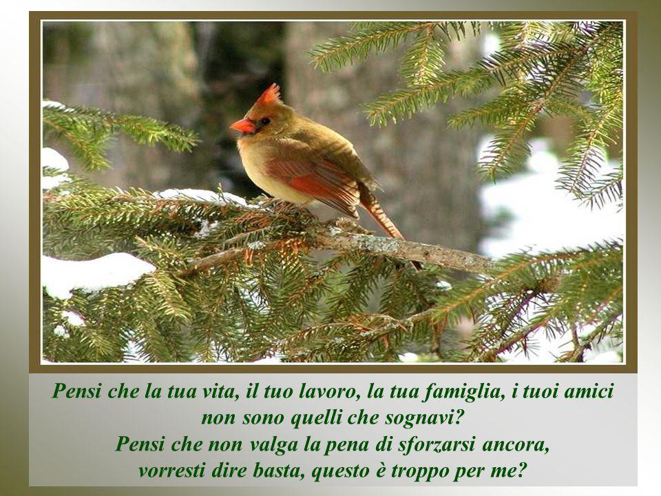 In questi casi è più difficile ricominciare, certo, però il passero non si arrende mai, continua a cantare e costruire, costruire e cantare...