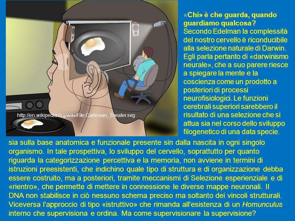 http://en.wikipedia.org/wiki/File:Cartesian_Theater.svg sia sulla base anatomica e funzionale presente sin dalla nascita in ogni singolo organismo.