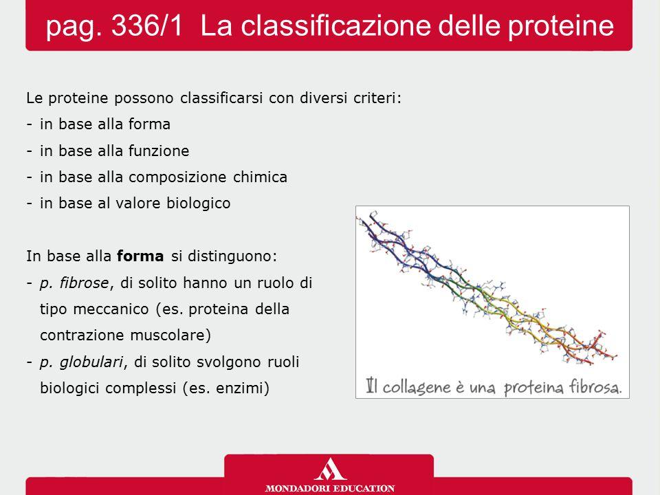Le proteine possono classificarsi con diversi criteri: -in base alla forma -in base alla funzione -in base alla composizione chimica -in base al valor