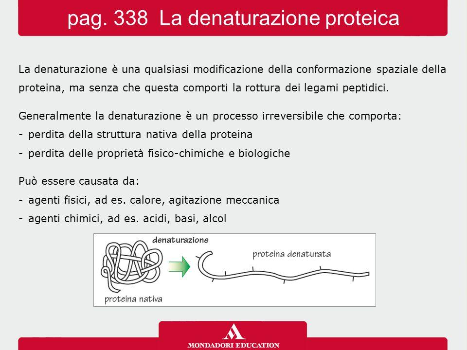 La denaturazione è una qualsiasi modificazione della conformazione spaziale della proteina, ma senza che questa comporti la rottura dei legami peptidi
