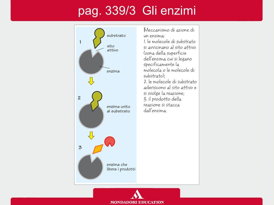 pag. 339/3 Gli enzimi