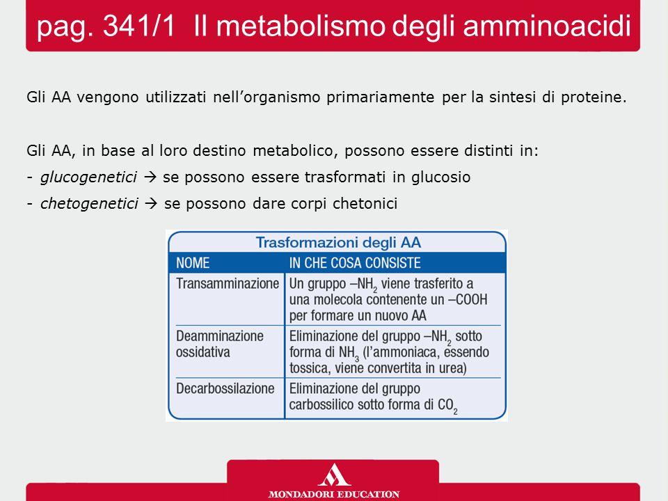 Gli AA vengono utilizzati nell'organismo primariamente per la sintesi di proteine. Gli AA, in base al loro destino metabolico, possono essere distinti