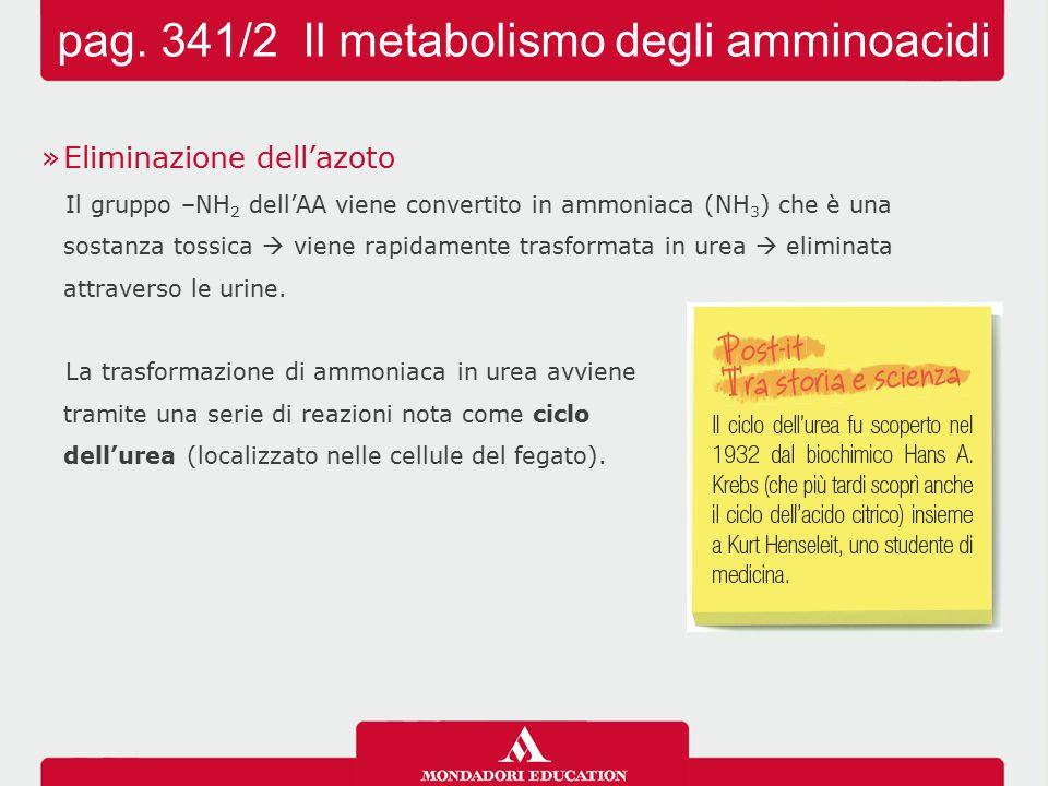 »Eliminazione dell'azoto Il gruppo –NH 2 dell'AA viene convertito in ammoniaca (NH 3 ) che è una sostanza tossica  viene rapidamente trasformata in u
