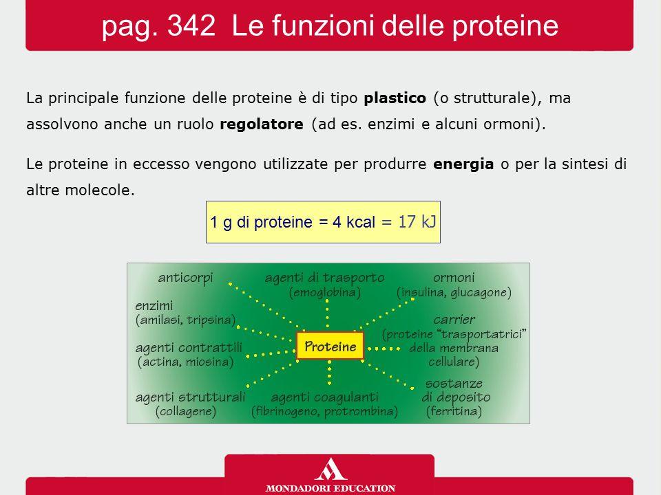 La principale funzione delle proteine è di tipo plastico (o strutturale), ma assolvono anche un ruolo regolatore (ad es. enzimi e alcuni ormoni). Le p