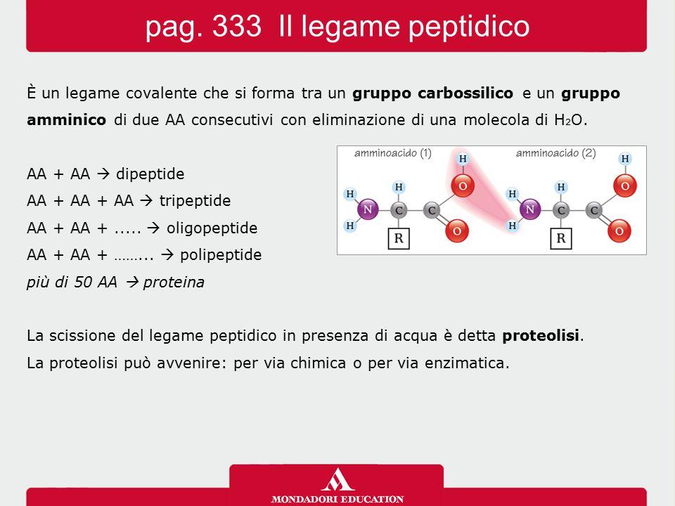 È un legame covalente che si forma tra un gruppo carbossilico e un gruppo amminico di due AA consecutivi con eliminazione di una molecola di H 2 O. AA