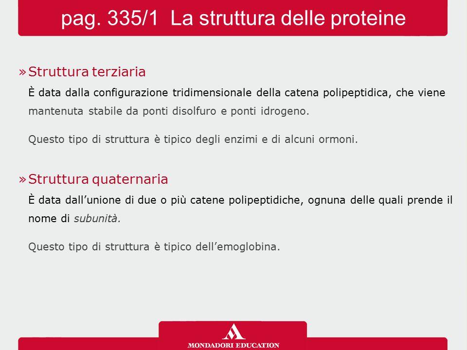 pag. 335/2 La struttura delle proteine