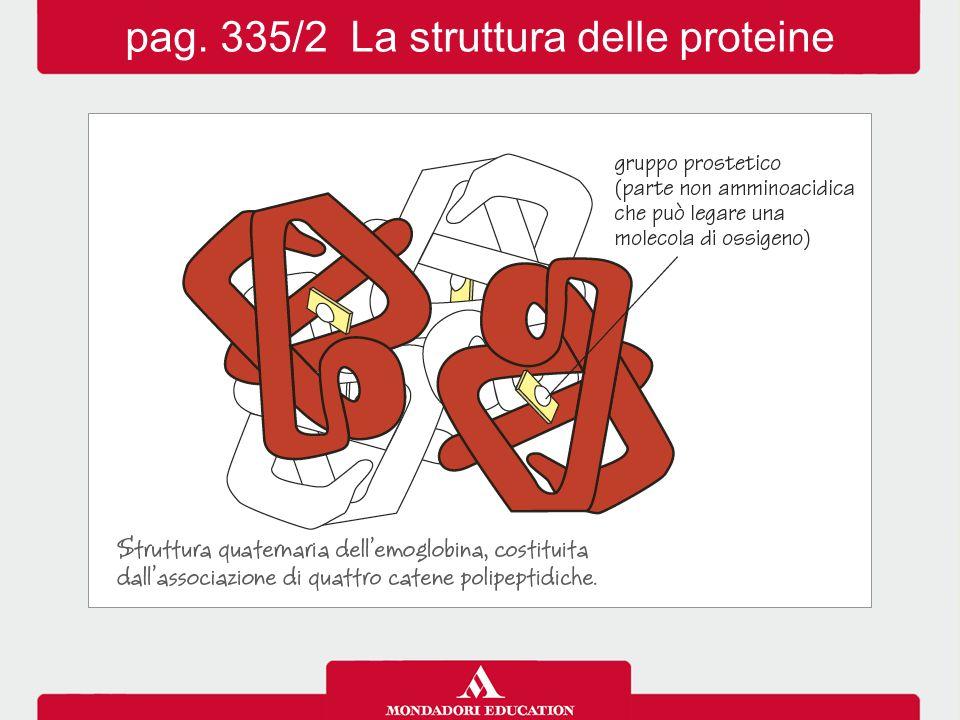 La principale funzione delle proteine è di tipo plastico (o strutturale), ma assolvono anche un ruolo regolatore (ad es.