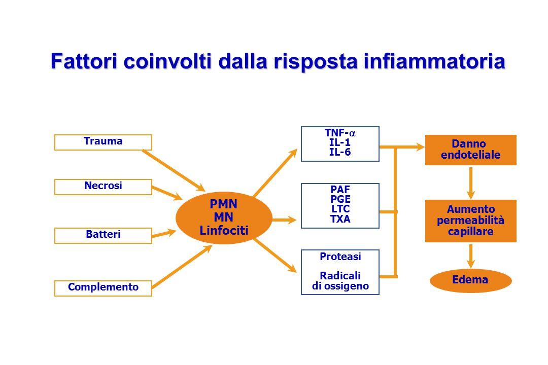 Trauma Complemento Necrosi Batteri PMN MN Linfociti Danno endoteliale Aumento permeabilità capillare Edema Fattori coinvolti dalla risposta infiammato