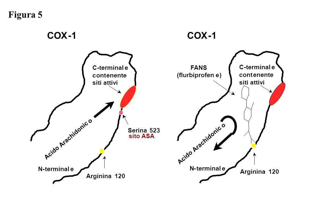 COX-1 N-terminale Serina523 Arginina120 C-terminale contenente siti attivi COX-1 N-terminale Arginina120 C-terminale contenente siti attivi Acido Arac