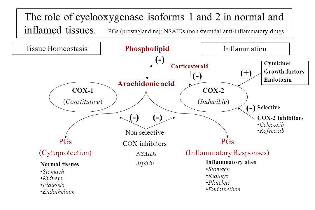 COX-1 N-terminale Serina523 Arginina120 C-terminale contenente siti attivi COX-1 N-terminale Arginina120 C-terminale contenente siti attivi Acido Arachidonic o FANS (flurbiprofene) Acido Arachidonic o Figura 5 sito ASA