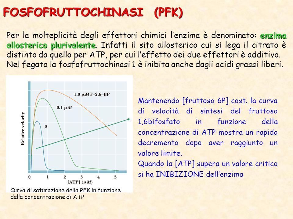 FOSFOFRUTTOCHINASI (PFK) enzima allosterico plurivalente Per la molteplicità degli effettori chimici l'enzima è denominato: enzima allosterico plurivalente.