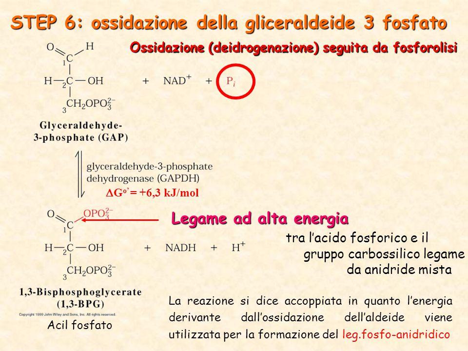 STEP 6: ossidazione della gliceraldeide 3 fosfato Acil fosfato Legame ad alta energia tra l'acido fosforico e il gruppo carbossilico legame da anidride mista Ossidazione (deidrogenazione) seguita da fosforolisi  G o' = +6,3 kJ/mol La reazione si dice accoppiata in quanto l'energia derivante dall'ossidazione dell'aldeide viene utilizzata per la formazione del leg.fosfo-anidridico