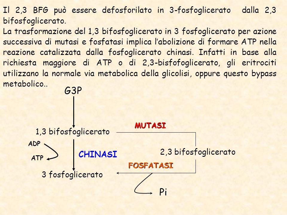 Il 2,3 BFG può essere defosforilato in 3-fosfoglicerato dalla 2,3 bifosfoglicerato.