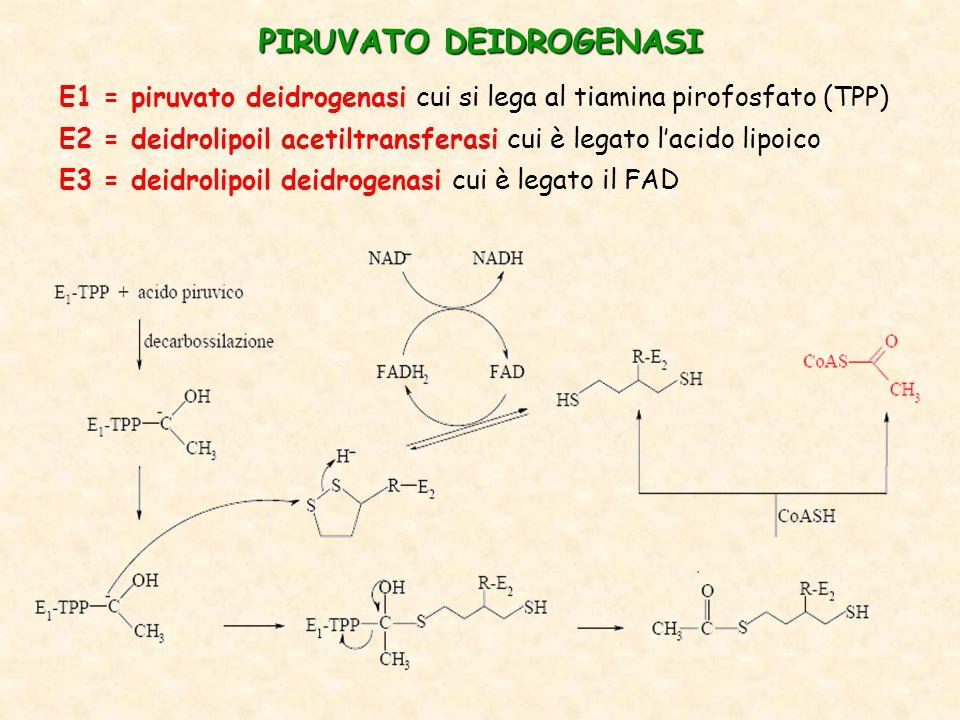 PIRUVATO DEIDROGENASI E1 = piruvato deidrogenasi cui si lega al tiamina pirofosfato (TPP) E2 = deidrolipoil acetiltransferasi cui è legato l'acido lipoico E3 = deidrolipoil deidrogenasi cui è legato il FAD