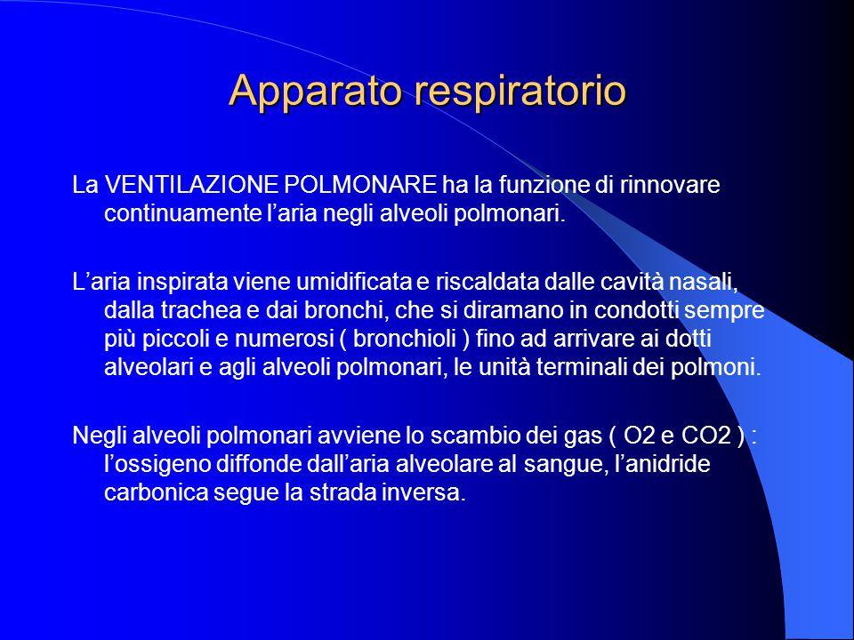 La VENTILAZIONE POLMONARE ha la funzione di rinnovare continuamente l'aria negli alveoli polmonari.