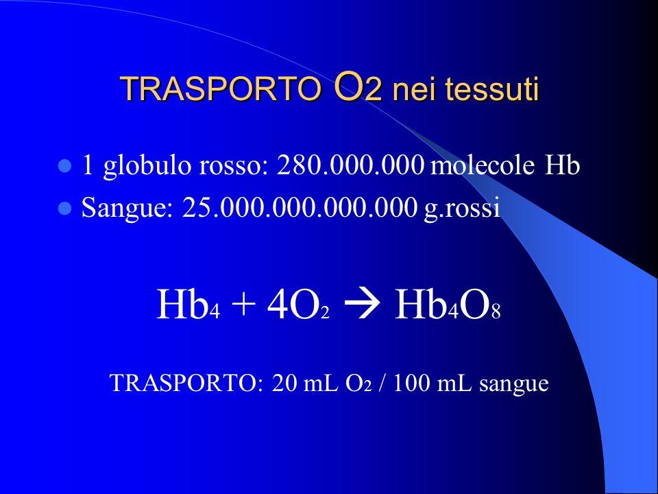 TRASPORTO O 2 nei tessuti 1 globulo rosso: 280.000.000 molecole Hb Sangue: 25.000.000.000.000 g.rossi Hb 4 + 4O 2  Hb 4 O 8 TRASPORTO: 20 mL O 2 / 100 mL sangue