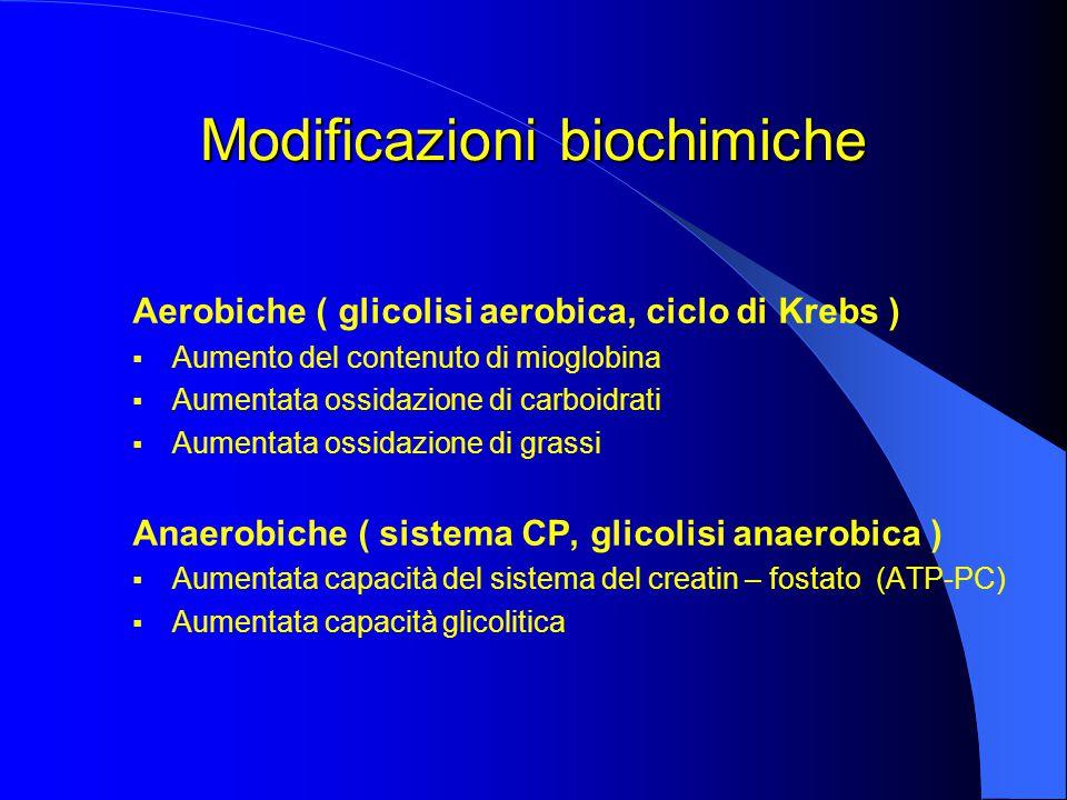 Modificazioni biochimiche Aerobiche ( glicolisi aerobica, ciclo di Krebs )  Aumento del contenuto di mioglobina  Aumentata ossidazione di carboidrati  Aumentata ossidazione di grassi Anaerobiche ( sistema CP, glicolisi anaerobica )  Aumentata capacità del sistema del creatin – fostato (ATP-PC)  Aumentata capacità glicolitica